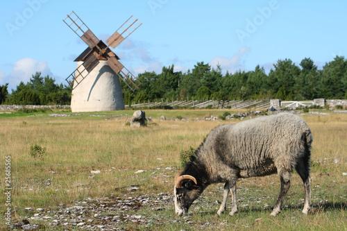 Fotografía  Idylle auf Gotland