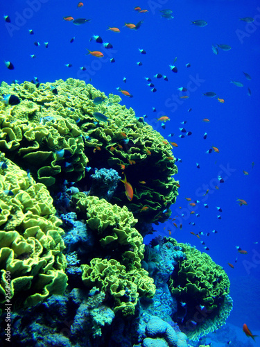 Arrecife Del Mar Rojo Buy This Stock Photo And Explore Similar