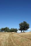 parco nazionale del Pollino - Basilicata