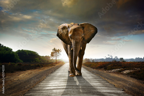 Fotobehang Olifant Walking Elephant