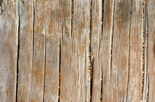 Abstract Background Texture Of Weathered Wood Near A Beach