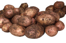 Young Dirty Potatoes.