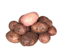 Handful Of Young Potato. One Potato Clean, Others Dirty.