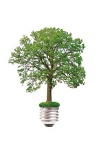 Eco Concept: Tree Grows Out Of The Light Bulb