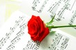 red rose and music