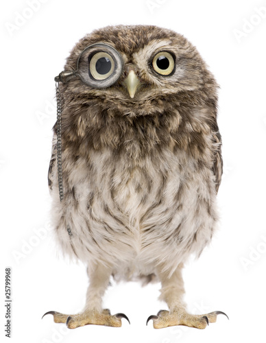 Fotobehang Uil Little Owl wearing magnifying glass, 50 days old, Athene noctua