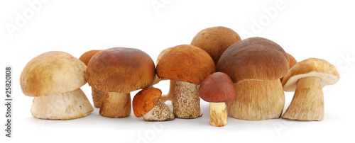 Fototapeta Mushrooms obraz