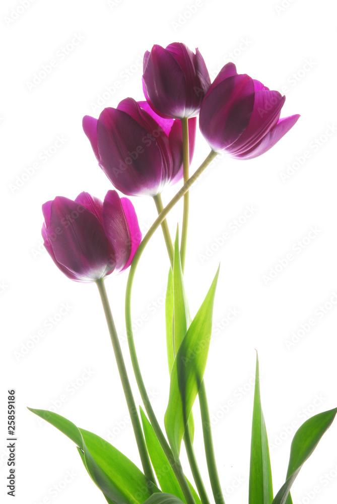 Fototapety, obrazy: Bukiet kwiatów tulipanów