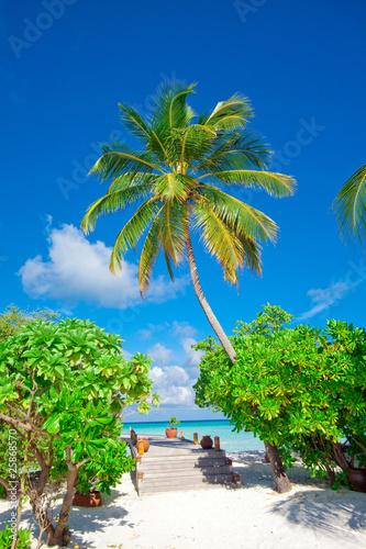 Motiv-Rollo Basic - Holiday Paradise