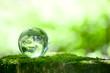Leinwandbild Motiv 森林と地球儀