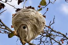 Hornet Nest III - Fall View Of...