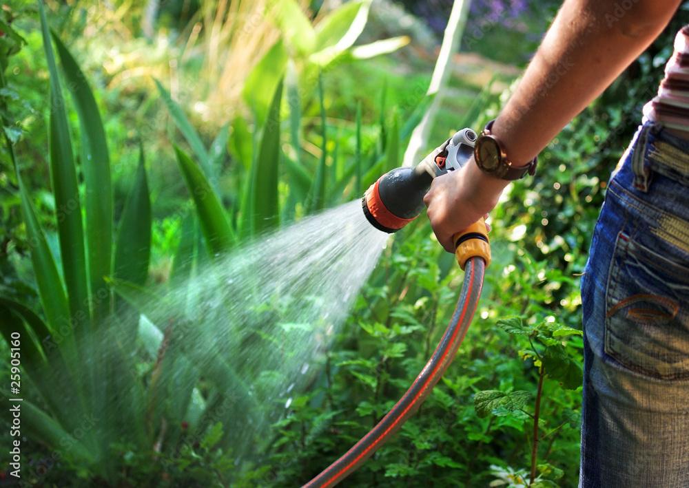 Fototapety, obrazy: Watering garden