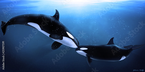 Photo sur Aluminium Dauphin orcas tenderness