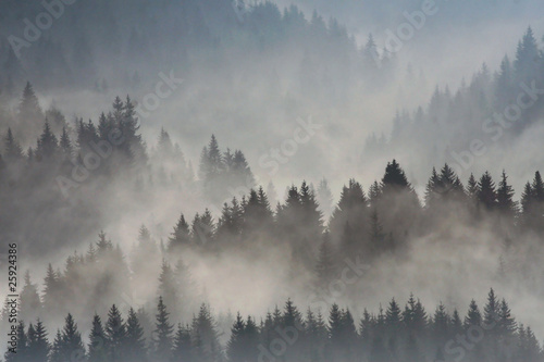 Poster Morning with fog evergreen trees