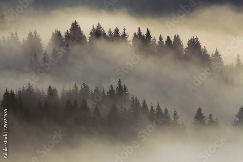 Canvas Prints Morning with fog foggy