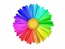 Flower Colorfull Closeup