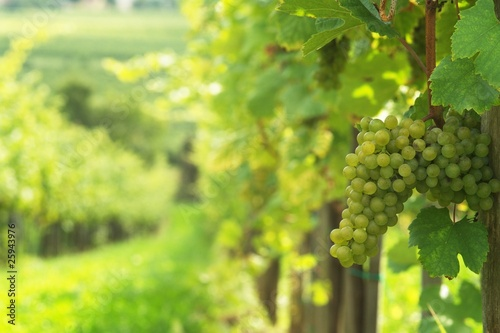 Leinwand Poster Weißwein