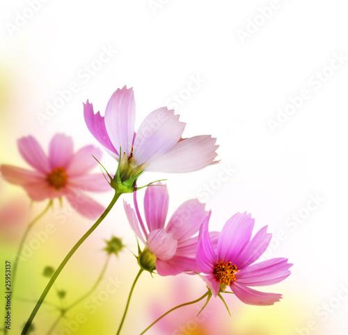 Beautiful Floral BorderFlower design