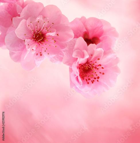 Tematy fototapet  kwiaty-brzoskwini