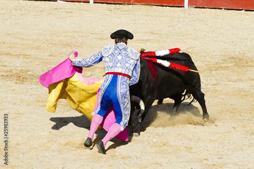 Corrida Fighting bull picture from Spain. Black bull