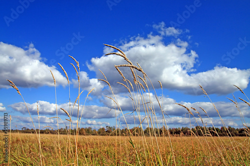Foto auf AluDibond Nordsee dry herb on autumn field
