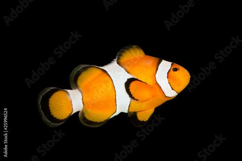 Slika na platnu fish