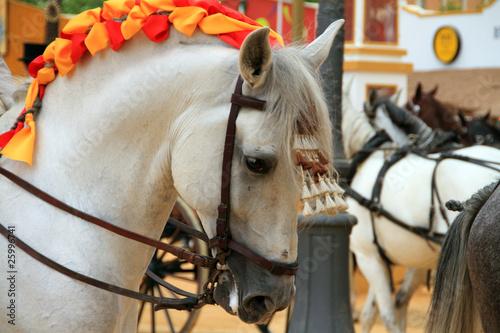Caballo blanco de Jerez
