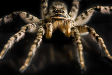 Deadly Danger Spider Attack