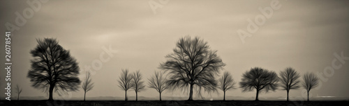 Fototapeta arbre silhouette tronc branche nu automne hiver calligraphie ill obraz