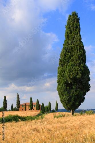 Foto  Zypressen mit Haus vor blauem Himmel, Toskana, Italien