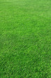 canvas print picture - Grass on a golf course