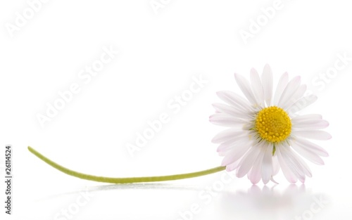 Canvas Print daisy flower