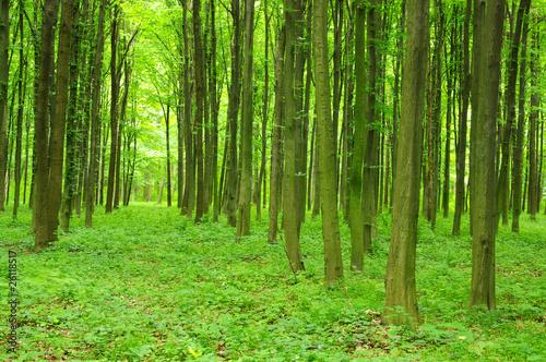 Trees #26118517