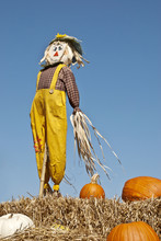 Scarecrow And Pumpkins Sky Background
