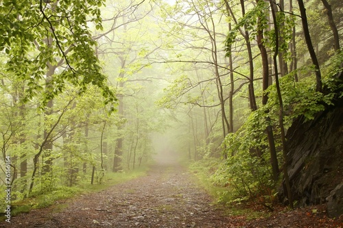 Foto auf Acrylglas Wald im Nebel Path through misty spring forest