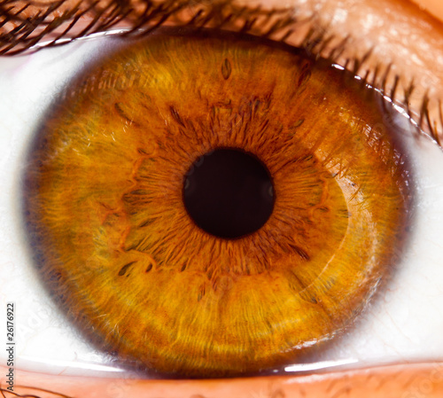 Staande foto Iris Human eye close up ...