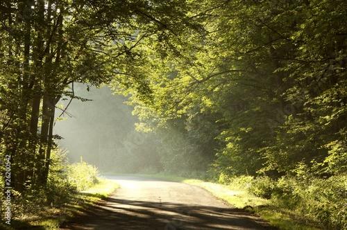 Foto auf Acrylglas Wald im Nebel Rural way through misty forest at sunrise
