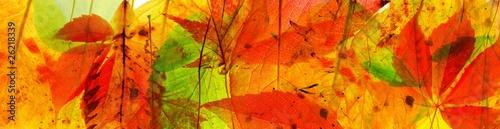 abstrakter Herbsthintergrund - 26218339
