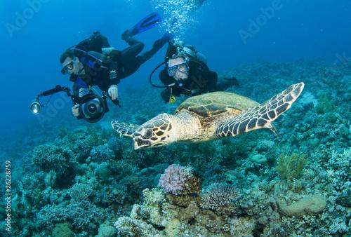 Foto op Canvas Duiken scuba divers having fun with sea turtle