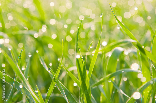 Patches of light from dew on a grass