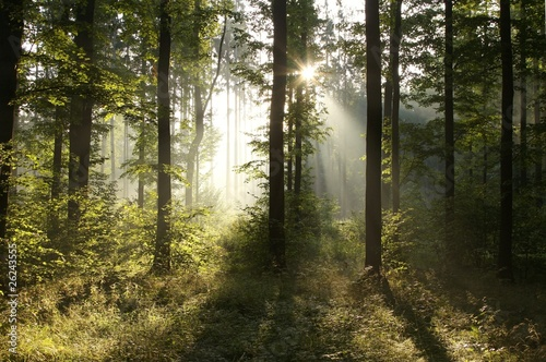 Papiers peints Foret brouillard Misty forest at sunrise