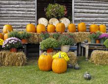 Pumpkins For Sale At Roadside Market