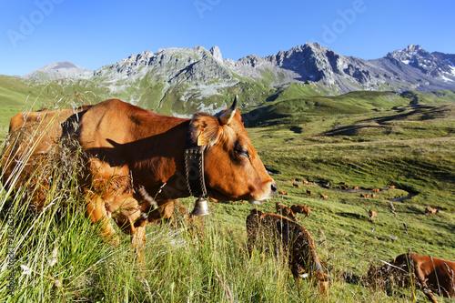 Poster de jardin Vache au pays des tarines