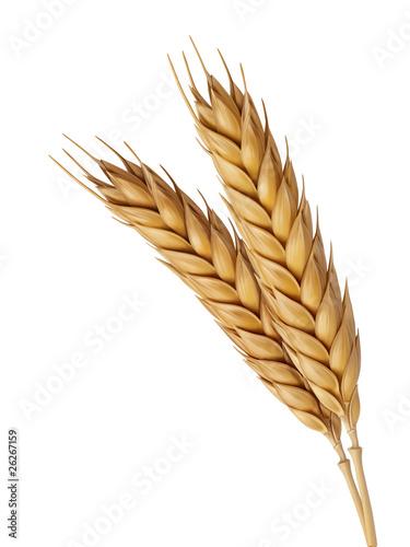 Fotografia Two Wheat