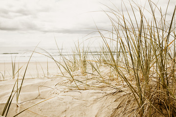 Fototapeta Close up of a tall grass on a beach during cloudy season