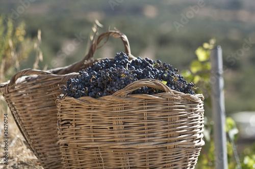Fotografía  Cesta de uvas de la vendimia