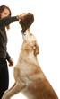 canvas print picture - Hund und Frau