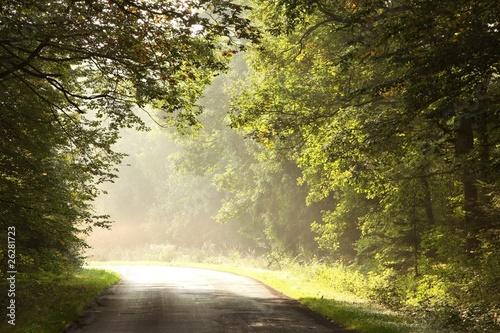 Foto auf Acrylglas Wald im Nebel Rural road through early autumn forest on a foggy morning