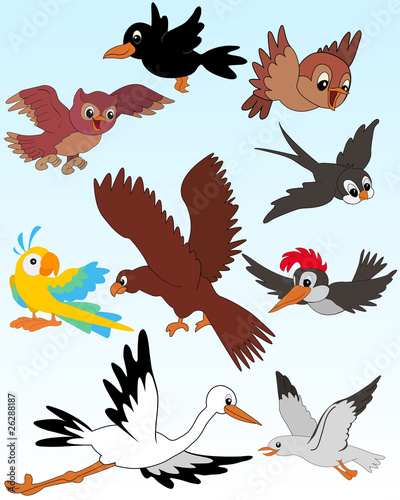 Printed kitchen splashbacks Zoo Birds