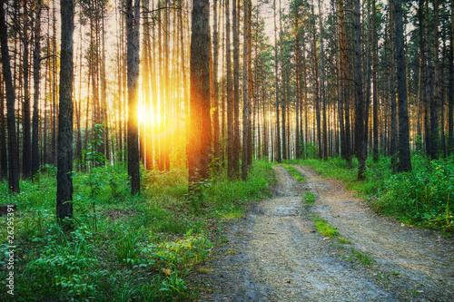 Fotobehang Natuur in the woods